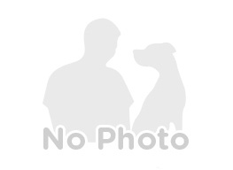 Irish Wolfhound Breeder in Raymond, CA